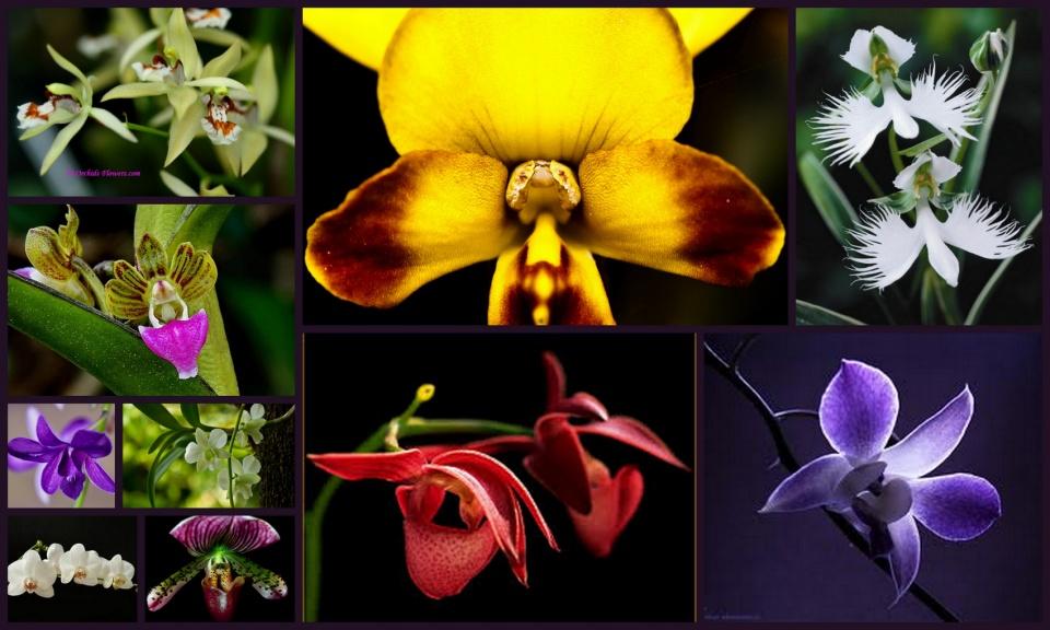 Szeretitek a szépséges virágokat!? Orchidea és bromélia kiállítás és vásár - a ceremóniamester ajánlja!