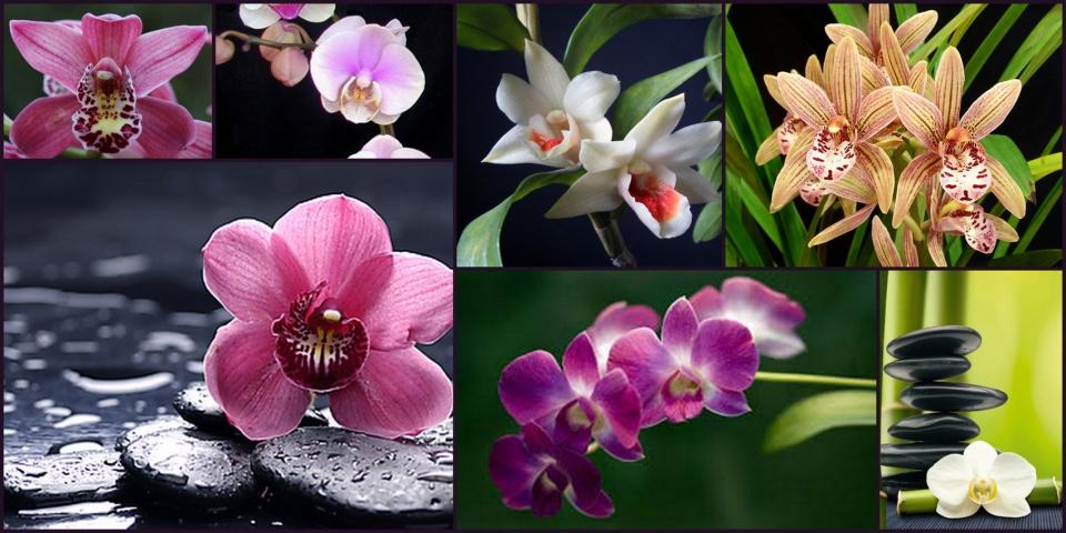 Orchidea és Bromélia Kiállítás - ceremóniamester ajánlja