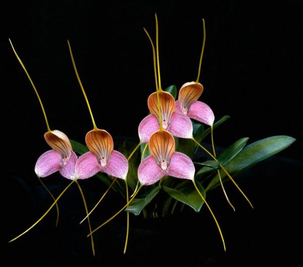 Orchidea kiállítás és vásár 2014  - ceremóniamester ajánlja