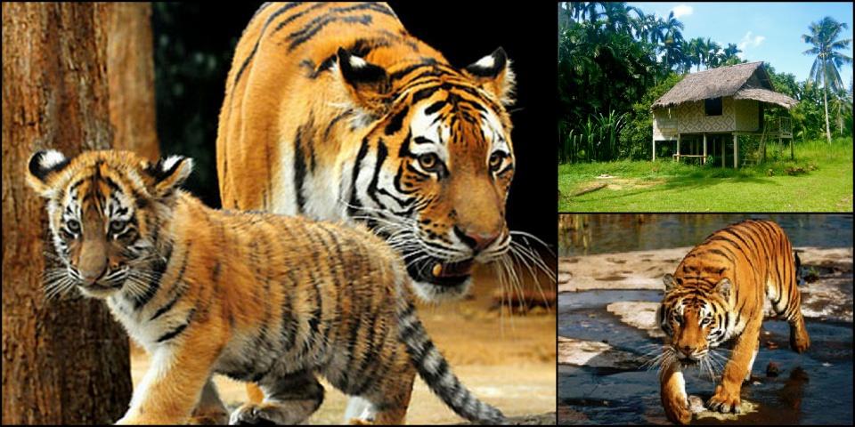 Elefántháton a tigrisek nyomában - ceremóniamester ajánlja